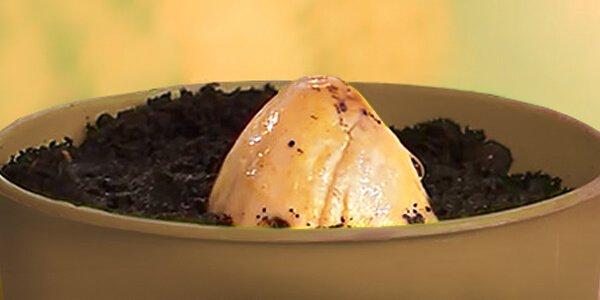 Косточка авокадо в горшке