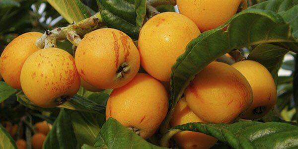 как выглядит фрукт бива