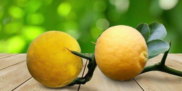 Понцирус или колючий лимон