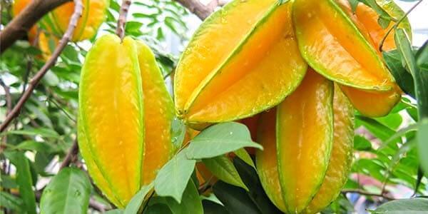 фрукт звездочка