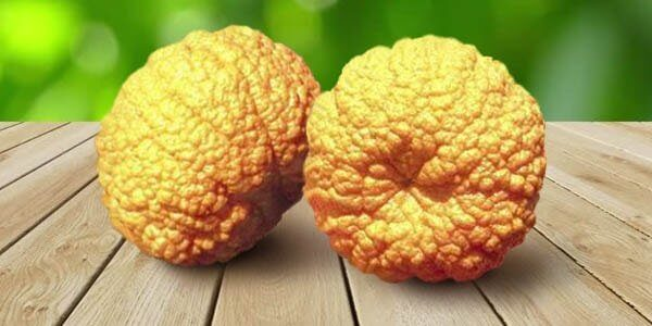 мандарин благородный или королевский мандарин