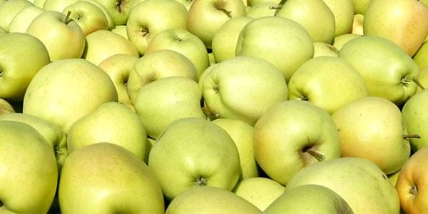 хранение яблок голден