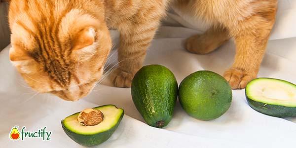 Косточка авокадо и животные