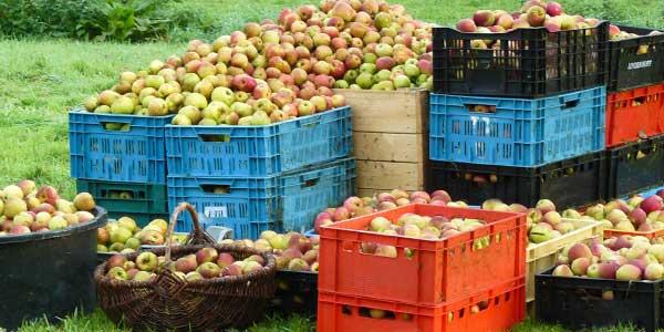 Тара-для-яблок