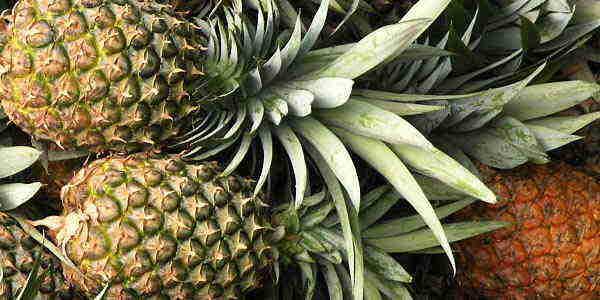 выбрать ананас2
