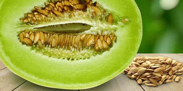 Семена-дыни