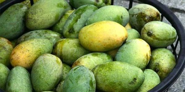 GaewLek манго
