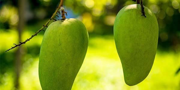 Raed манго