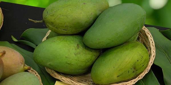 Thong-Dam манго