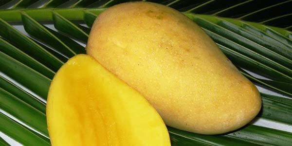 ok_rong манго