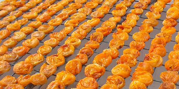 Сушка-абрикоса