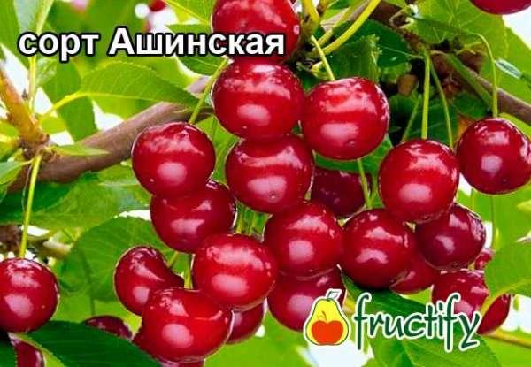 ashinskaya