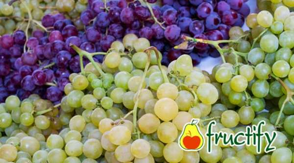 Vinograd (12)