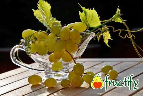 Vinograd (15)