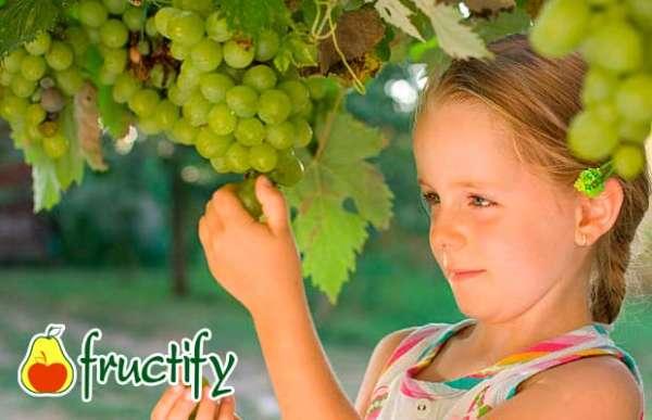 Vinograd (9)