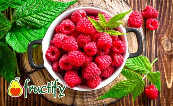 fruktyagod (14)