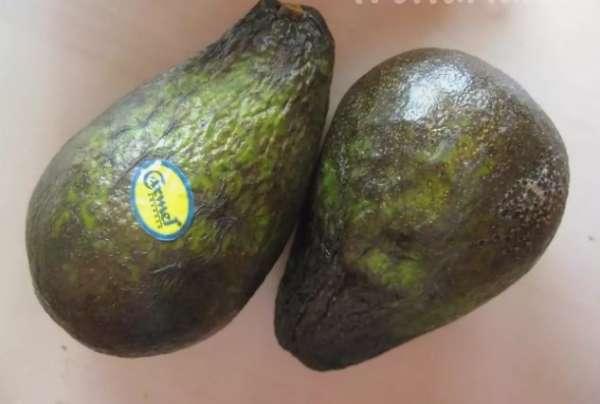 испорченный авокадо