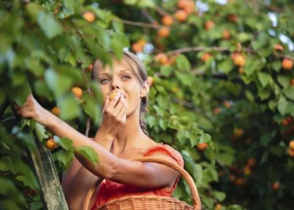 есть абрикос