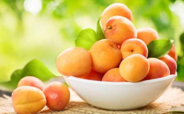 ягоды абрикосов