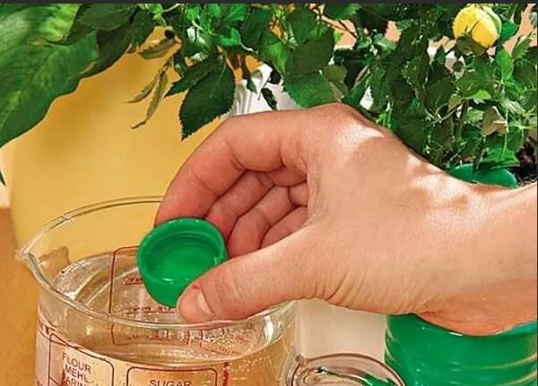 удобрение для лимона