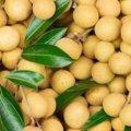 фрукт лонган