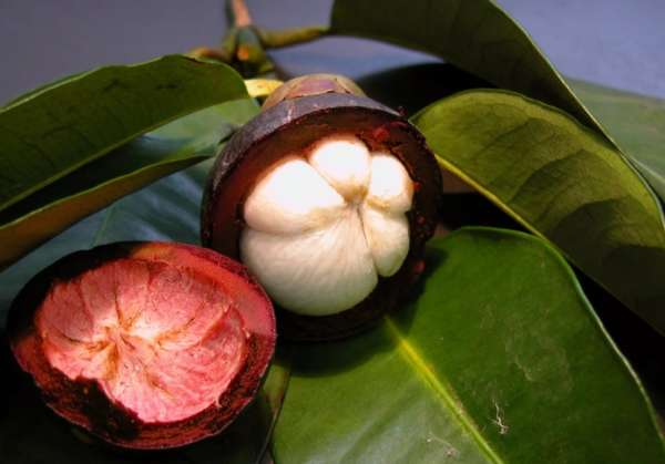 Мангостин фрукт: состав, полезные свойства