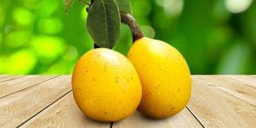 фрукт марула