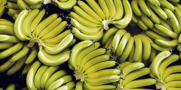 Банан- посадка и уход в домашних условиях, выращивание из семян