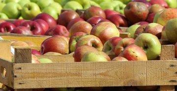 Яблоки-в-ящиках