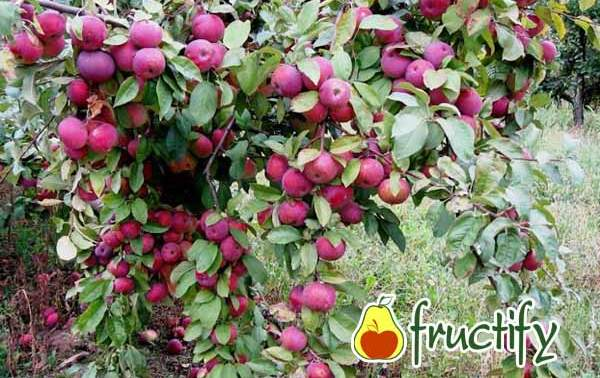 florina (11)