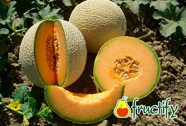 Cantaloup (1)