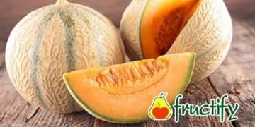 Cantaloup (11)