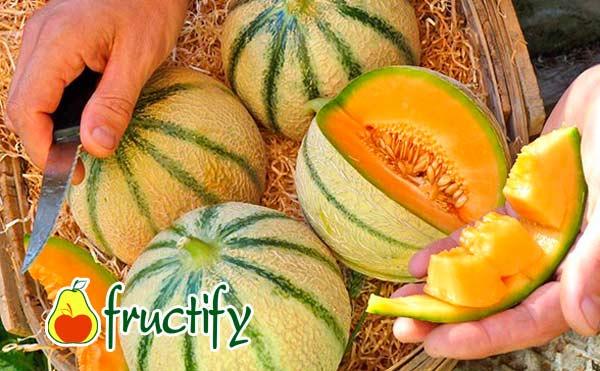 Cantaloup (7)