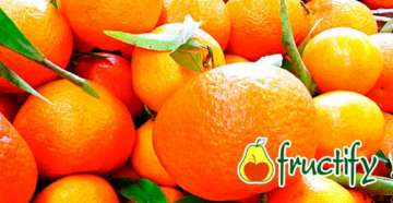 mandarine (14)