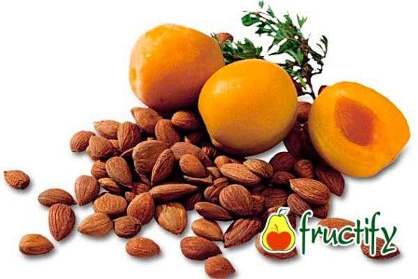 абрикосовые косточки польза и вред