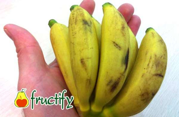 banankaloriyn (2)