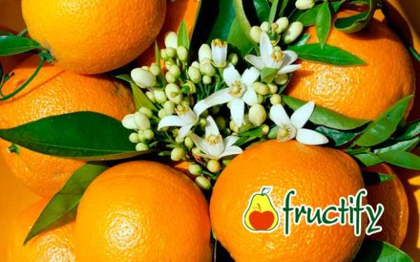 orangenblu (13)