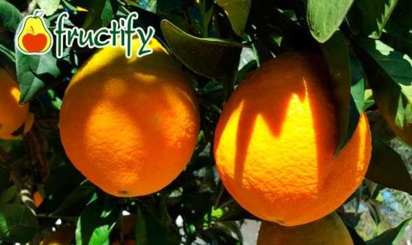 orangenblu (2)