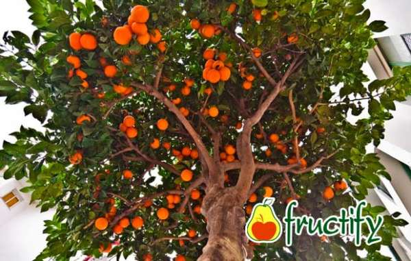orangenblu (4)