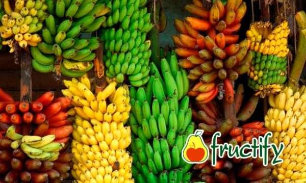 Bananalon (14)