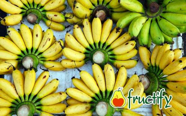 Bananalon (3)