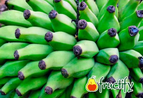 Bananalon (9)