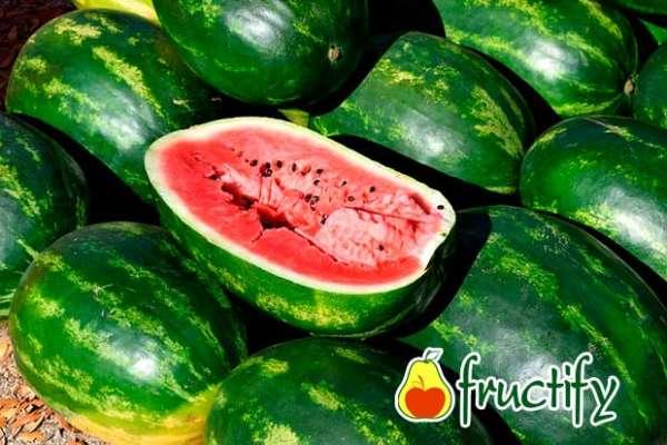 melon (29)