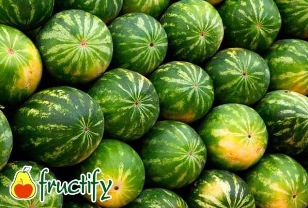 melon (5)