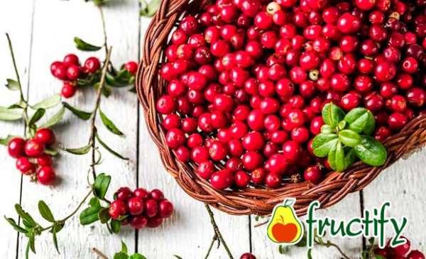 fruktyagod (13)