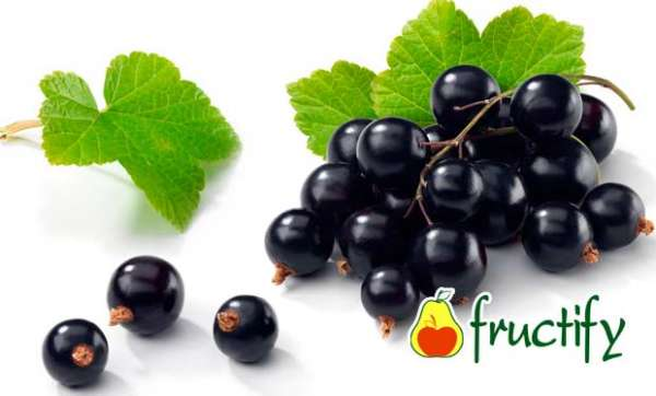 fruktyagod (26)