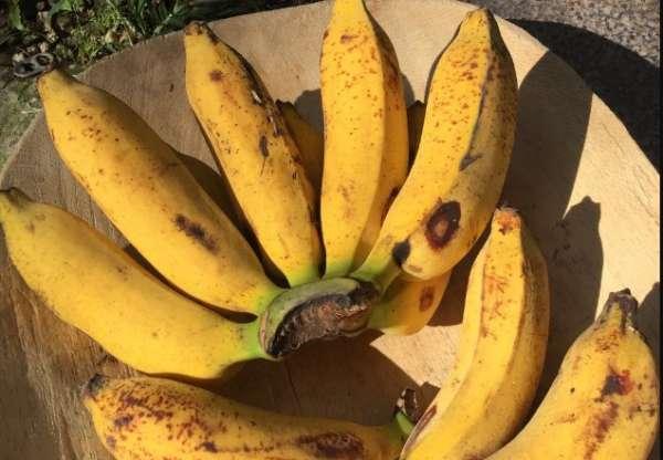 банан раджа
