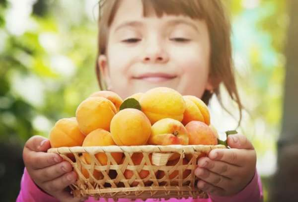 абрикосы детям